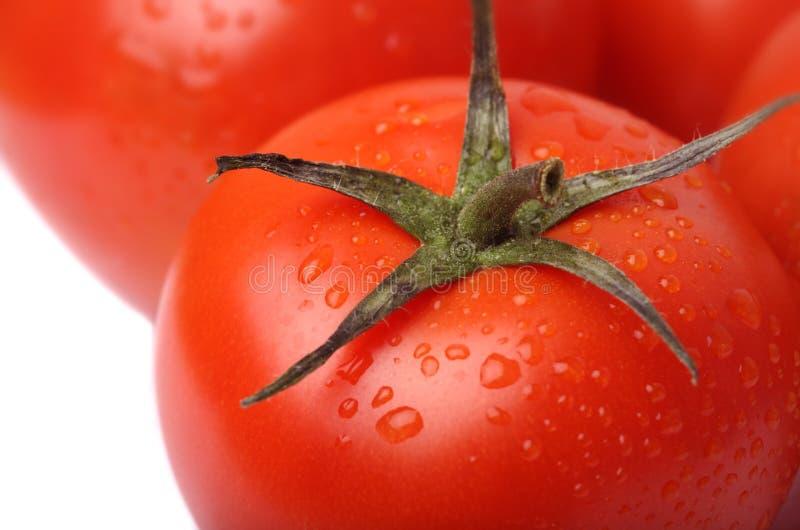 Tomaat op witte achtergrond stock foto