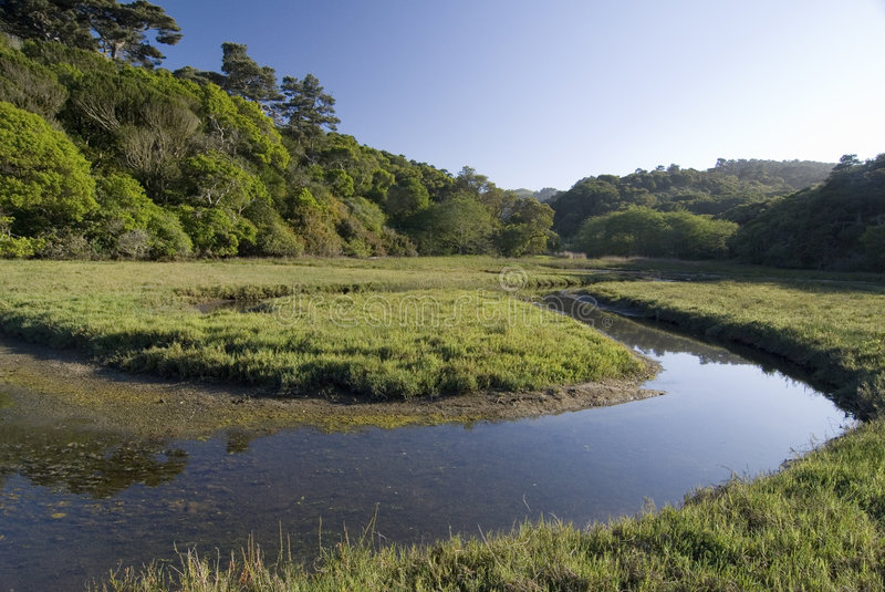 Tomales bay, state park royalty free stock photography