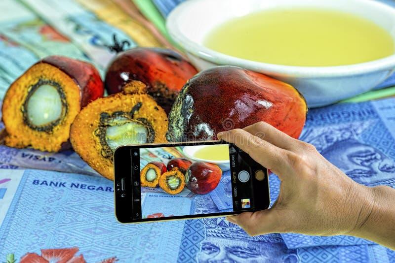 Tomando a foto de frutos de óleo frescos da palma com telefone celular imagem de stock royalty free