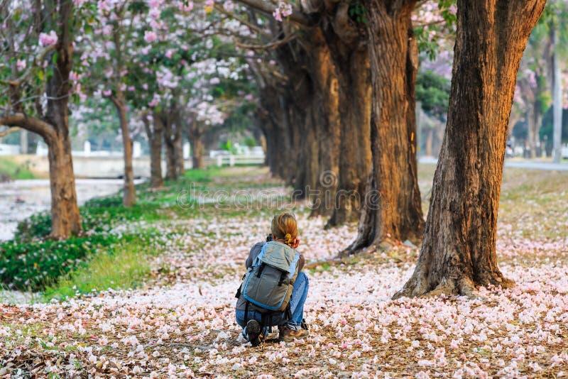 Tomando a imagem de árvores de trombeta cor-de-rosa imagens de stock