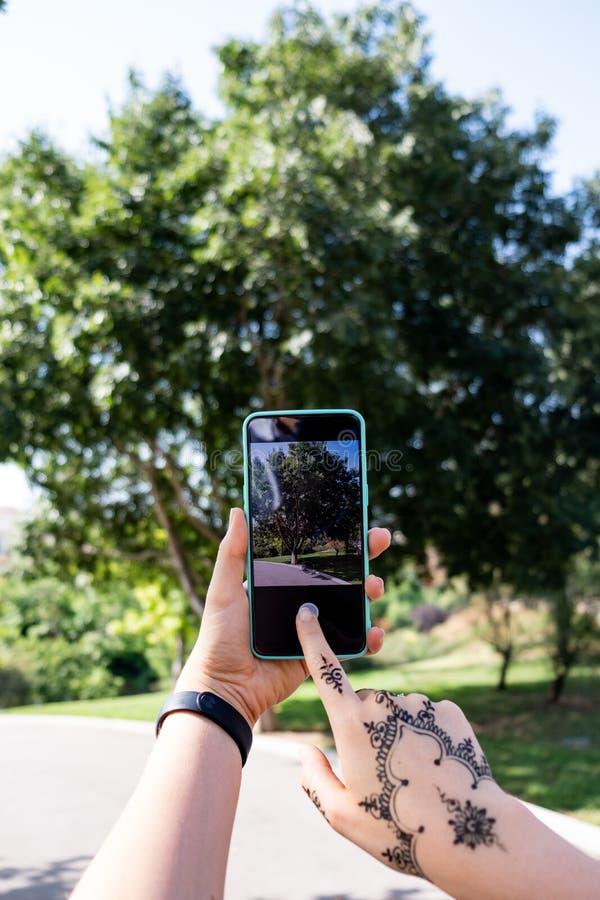 Tomando a imagem de uma árvore com um smartphone fotos de stock royalty free