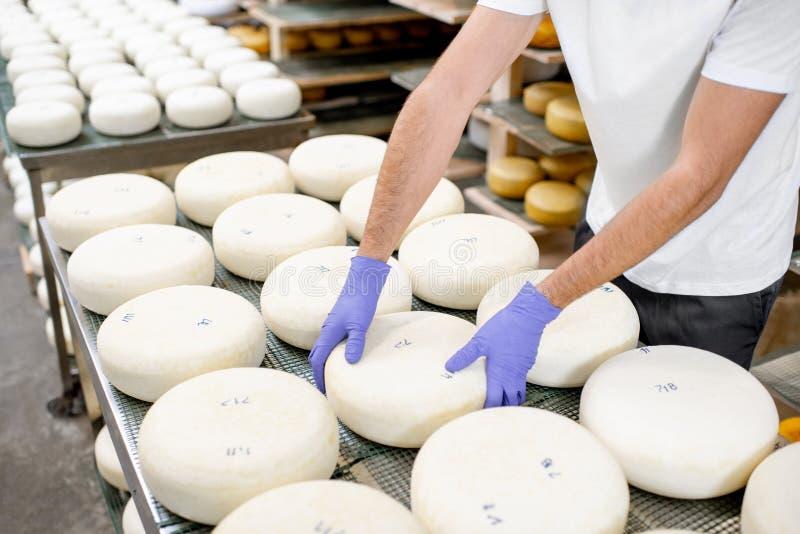 Tomando a roda do queijo fresco fotografia de stock royalty free