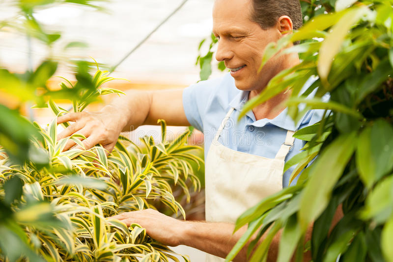 Tomar el buen cuidado de plantas imagen de archivo libre de regalías