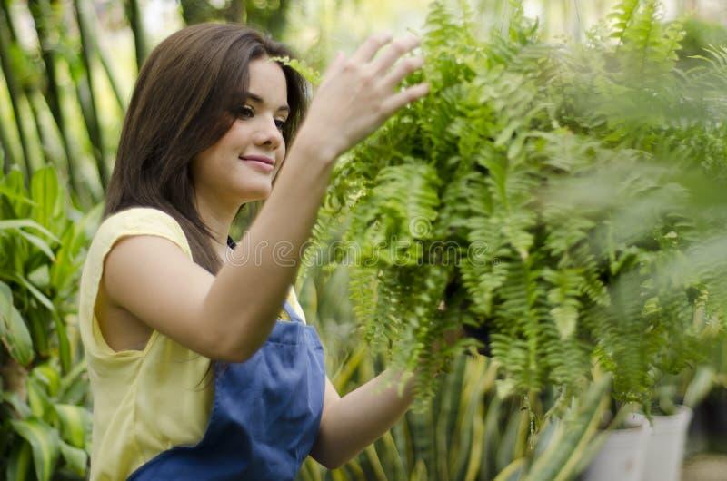 Tomar el cuidado de las plantas imagen de archivo libre de regalías