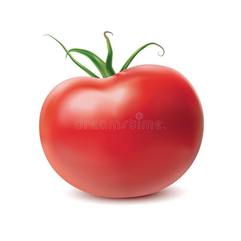 tomat vektor illustrationer