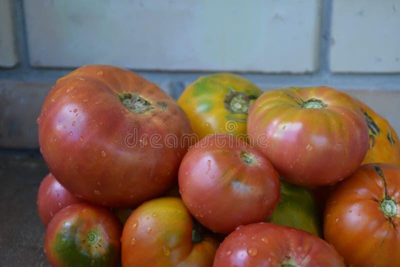 Tomat, arkivfoto