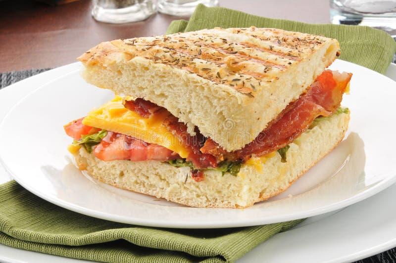 tomat för panini för baconostgrönsallat royaltyfria foton