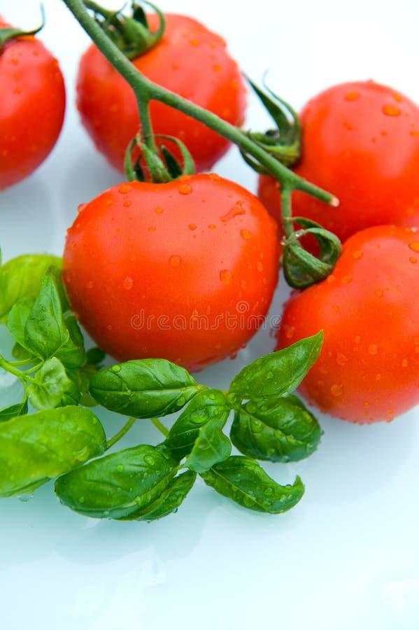 Tomat och basilika arkivbild