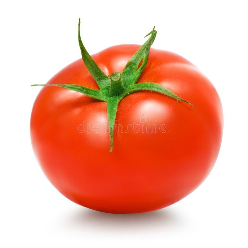 Tomat på vit bakgrund royaltyfria foton