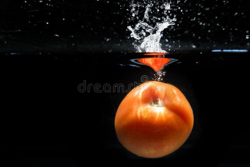 Tomat som faller in i vattnet och plaskar droppar på svart backg royaltyfria bilder