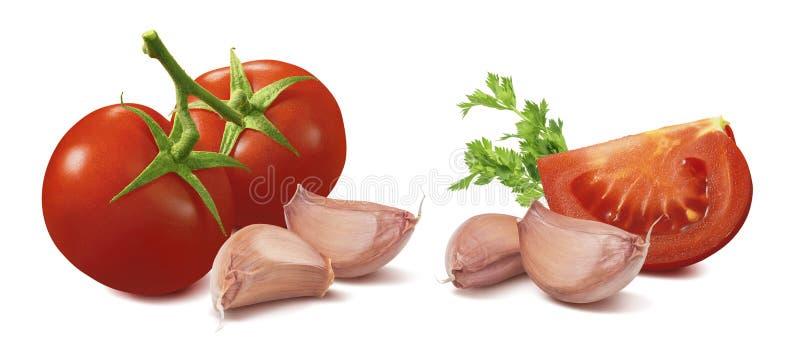 Tomat-, vitlök- och örtuppsättning som isoleras på vit bakgrund arkivbilder