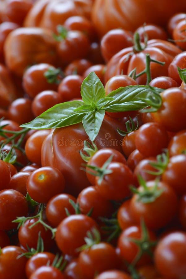 Tomatbakgrund med Basil Leaves 6 arkivfoton