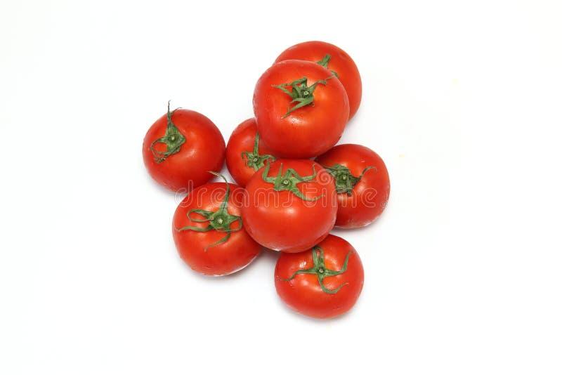 Tomate à un arrière-plan blanc image stock
