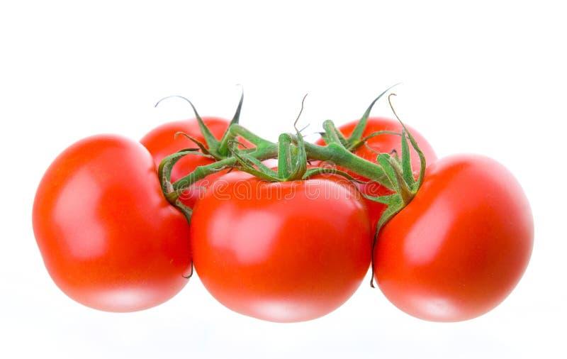 tomate arkivfoton