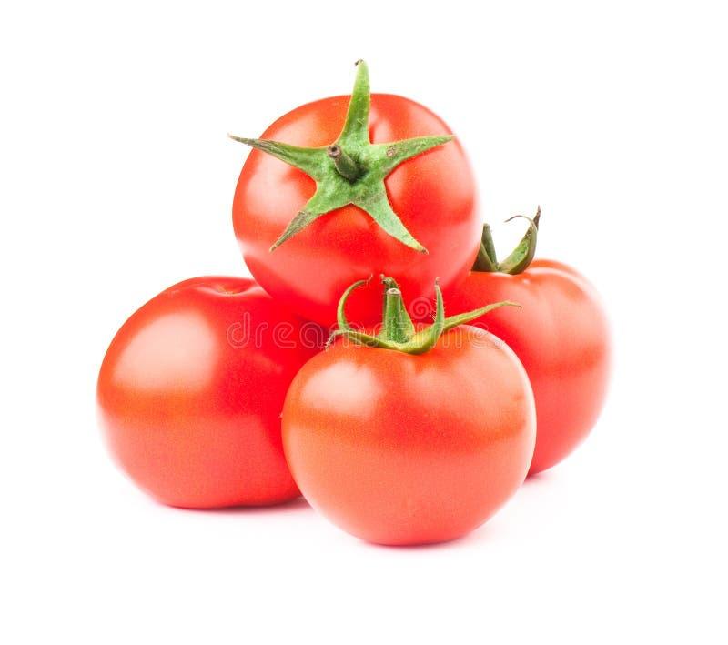 Tomate lizenzfreie stockbilder