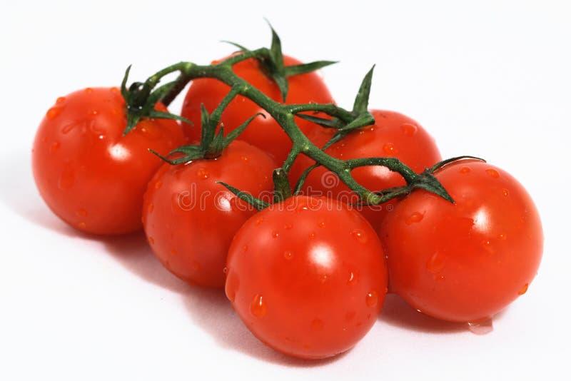 Tomate stockbilder