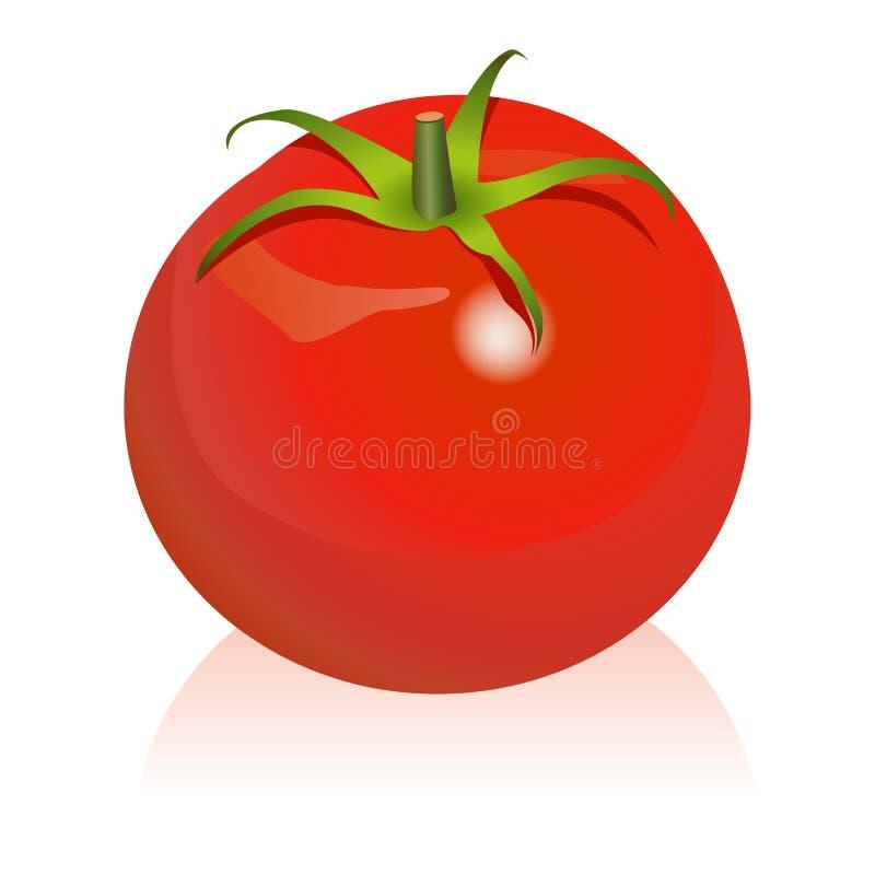 Tomate stock abbildung