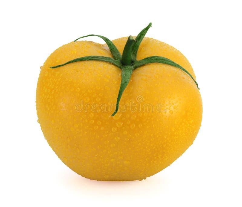 Tomate amarillo fresco con los waterdrops foto de archivo libre de regalías