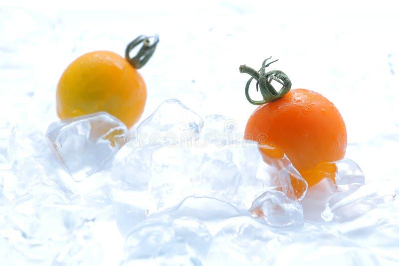 Tomate amarillo fresco en el hielo foto de archivo