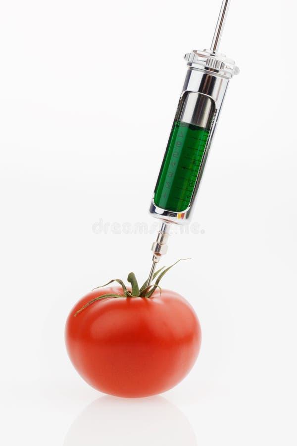 Tomate avec une seringue. Tomates génétiques de graphisme de photo photos stock