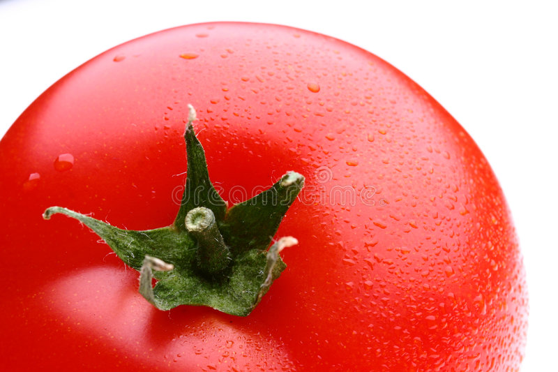Tomate brilhante foto de stock royalty free