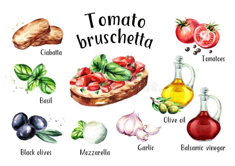 Tomate bruschetta Bestandteile Gezeichnete Illustration des Aquarells Hand, lokalisiert auf weißem Hintergrund vektor abbildung
