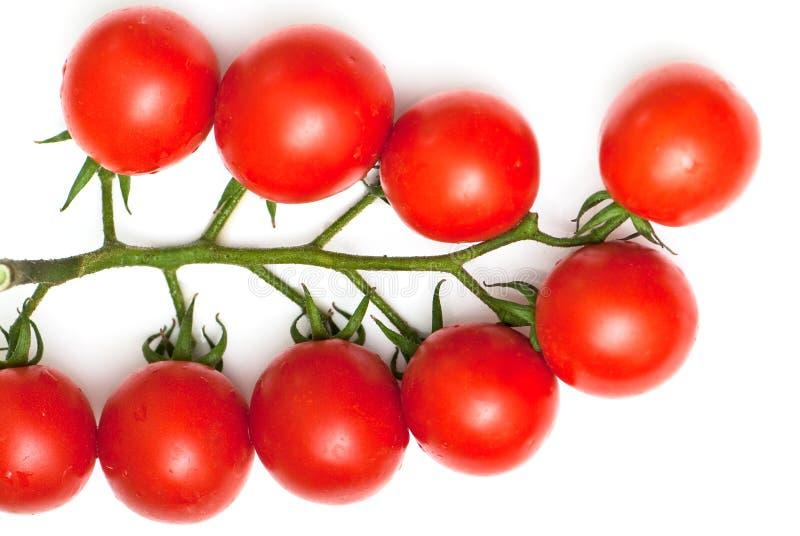 Tomate-cerise photos stock