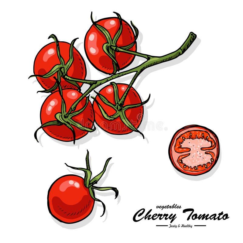 Tomate Cerise Coloree Dans Le Style De Croquis Illustration De