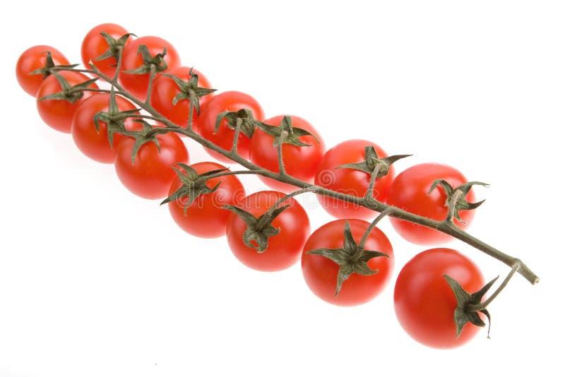 Tomate-cerise d'isolement photographie stock libre de droits