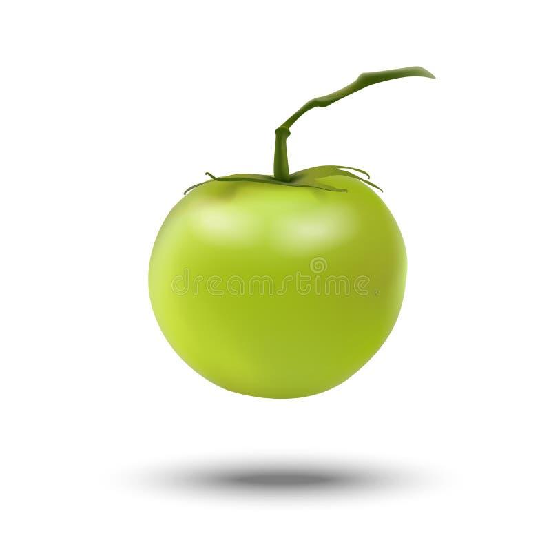 Tomate 3d fraîche verte réaliste d'isolement sur le fond blanc Allez illustration de vecteur