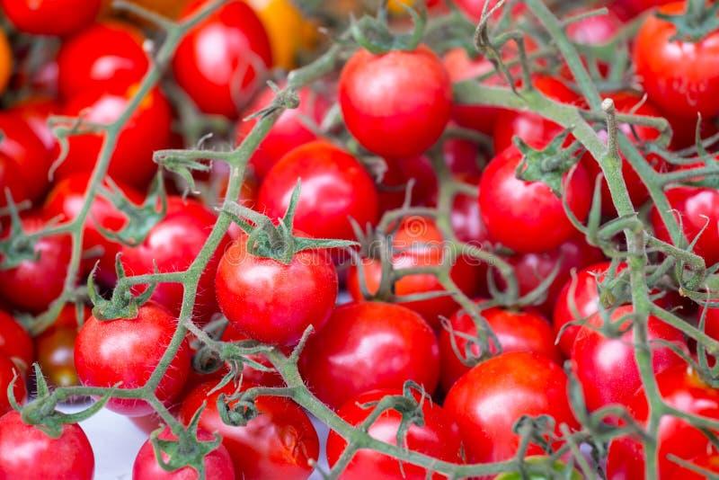 Tomate de cereza rojo imagen de archivo libre de regalías