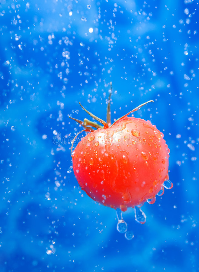 Tomate in den Tropfen eines Wasserspritzens stockfotos
