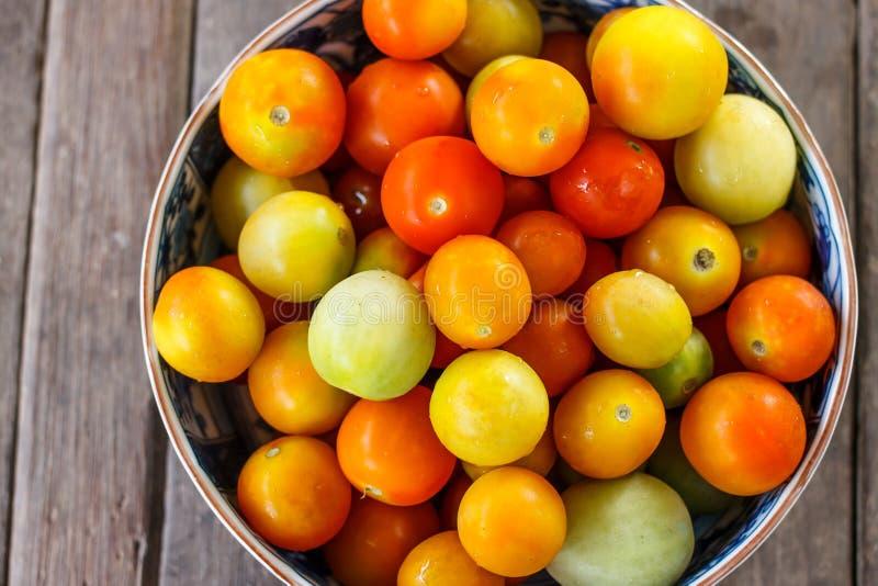 Tomate in der Schüssel lizenzfreies stockfoto