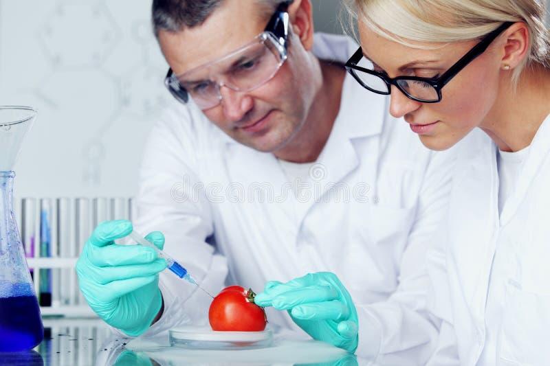 Tomate DNA stockbilder