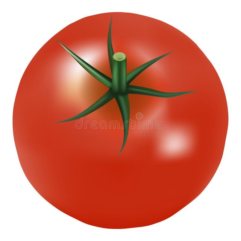 Tomate fresco rojo maduro grande con perejil en un fondo blanco libre illustration