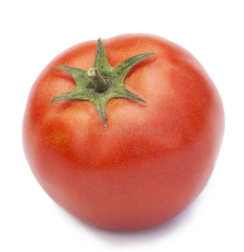 Tomate frisch und reif stockbild
