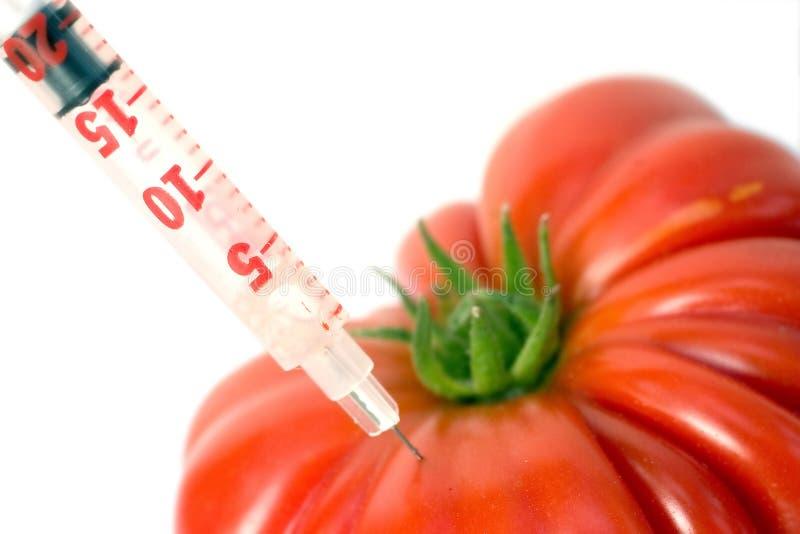 Tomate génétique photographie stock