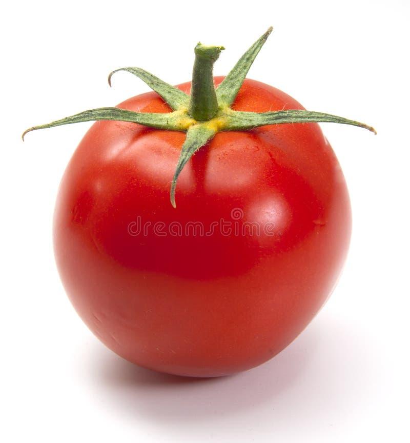 Tomate getrennt stockbilder