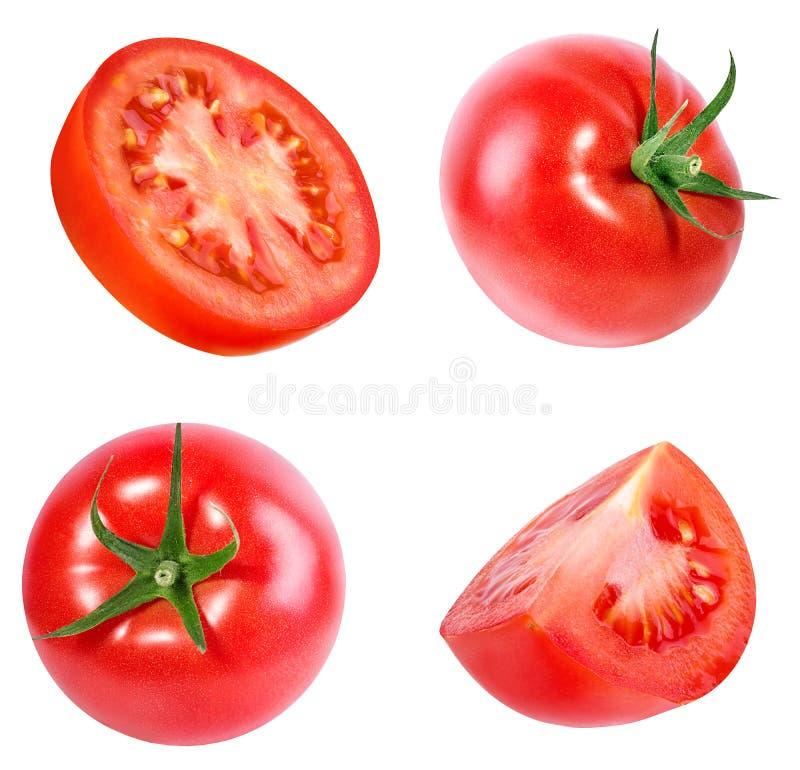 Tomate getrennt auf Weiß lizenzfreie stockfotos
