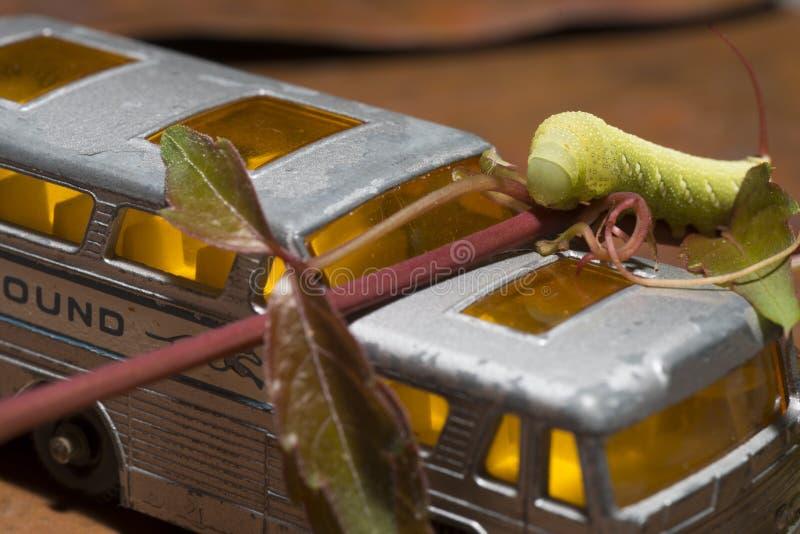 Tomate Hornworm-Gleiskettenfahrzeug mit Spielzeugbus lizenzfreie stockbilder