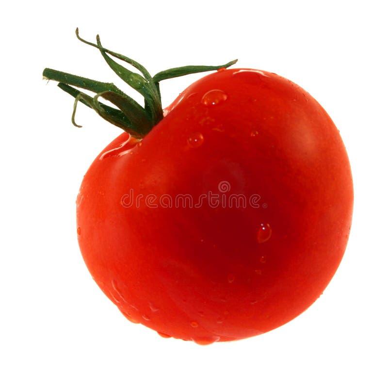 Tomate isolado foto de stock royalty free