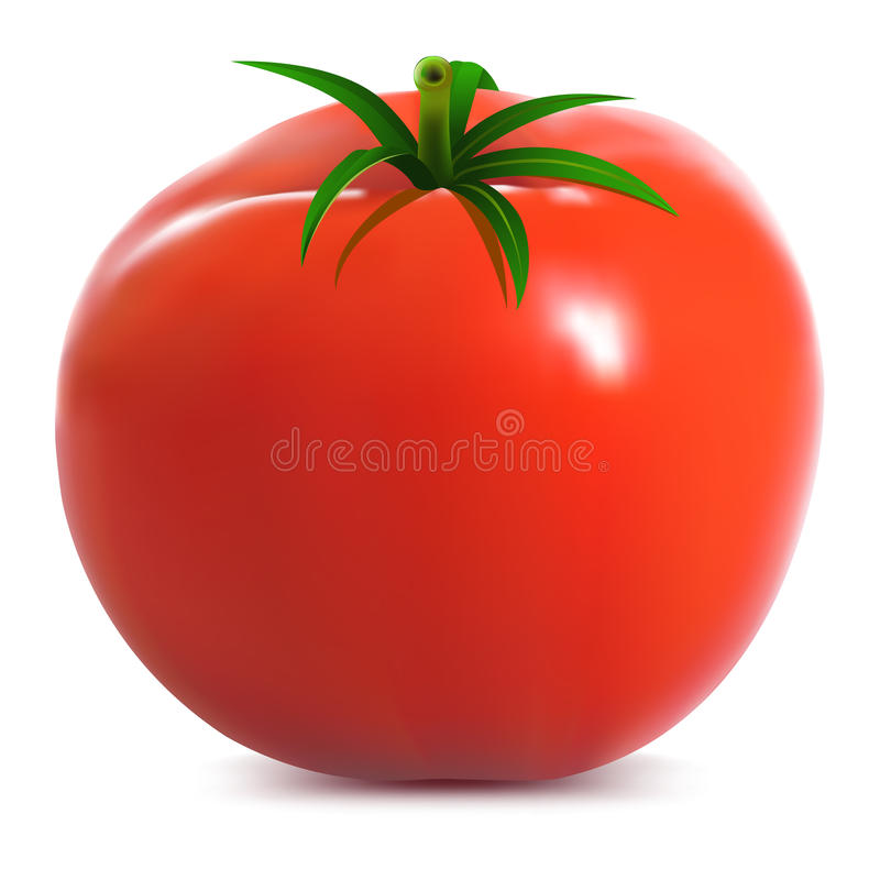 Tomate maduro grande ilustração stock