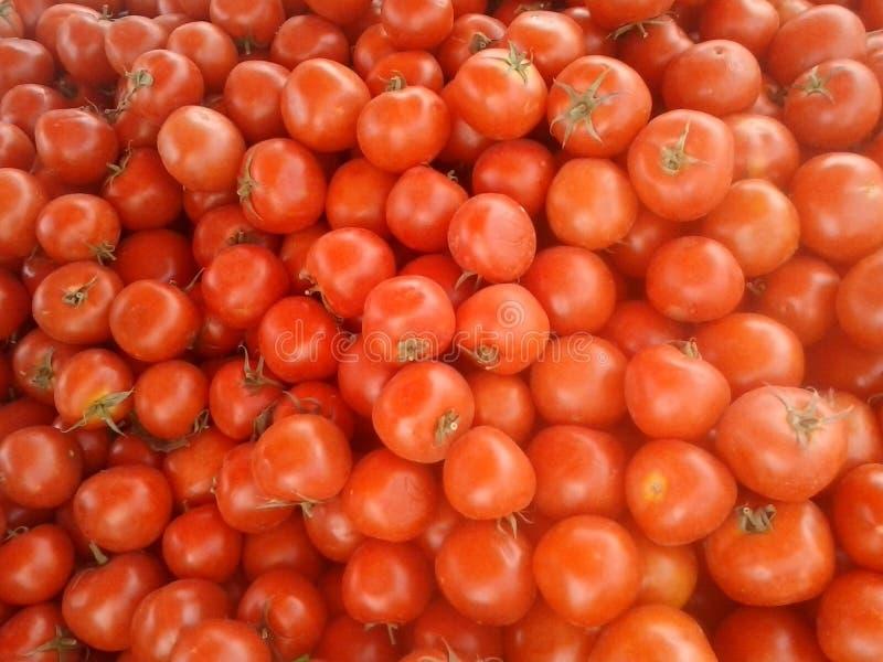 Tomate maroco stockfotografie