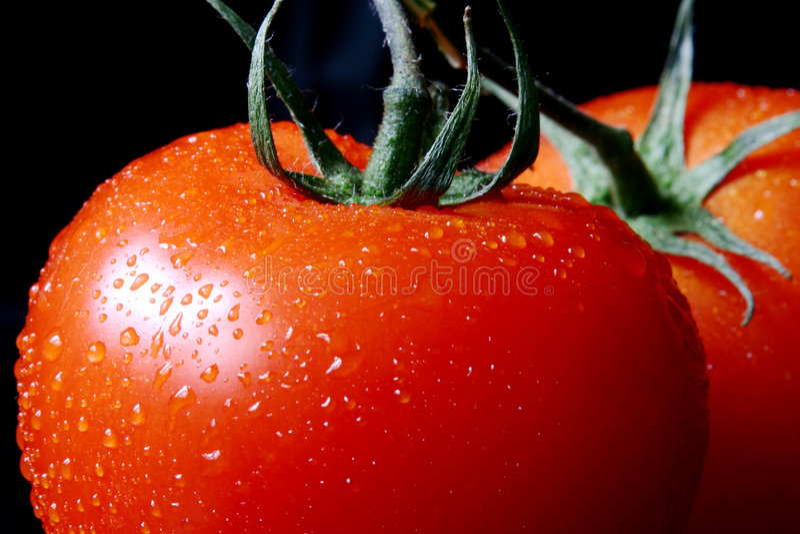 tomate proche vers le haut d'humide photo stock