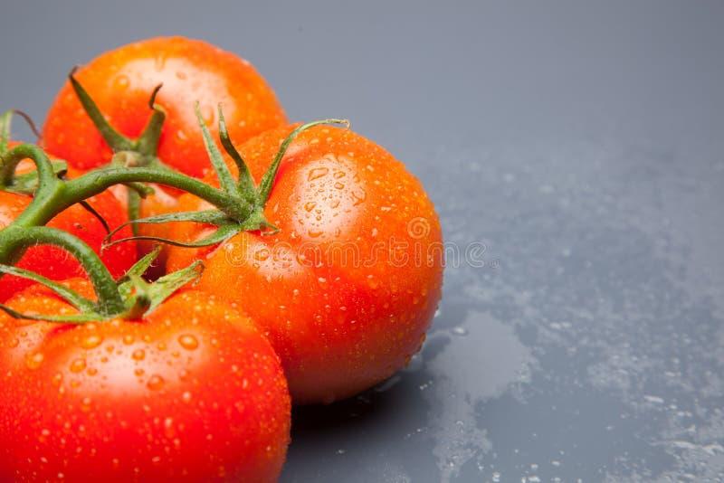 Tomate rojo, con descensos del agua que denota frescura y salud imagen de archivo