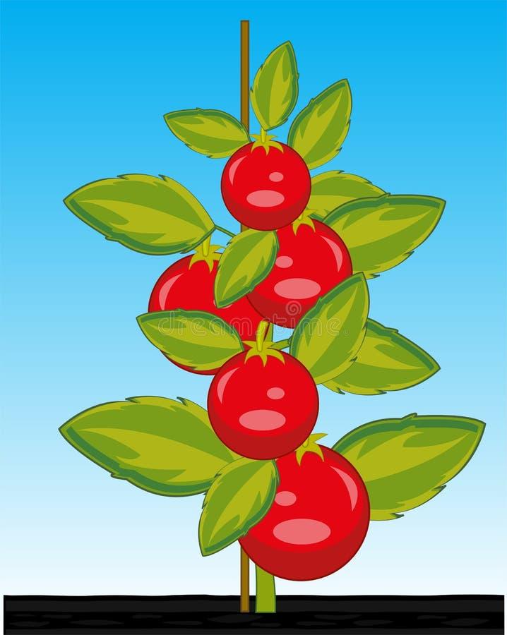 Tomate rojo de Bush y jugoso maduro de las verduras ilustración del vector
