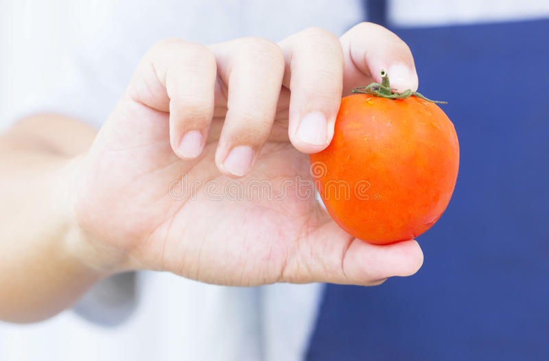 Tomate rojo fresco en la mano del hombre asiático foto de archivo libre de regalías