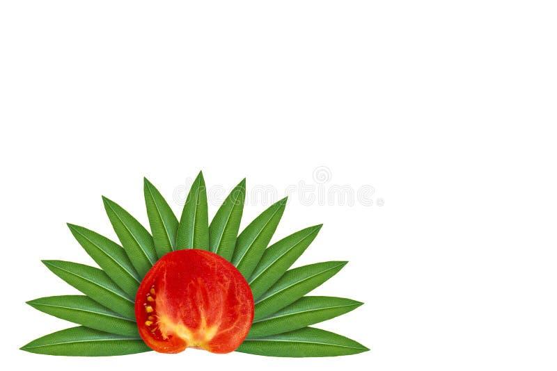 Tomate rojo orgánico fresco en el fondo de hojas verdes Aislado en blanco noción del origen natural imágenes de archivo libres de regalías