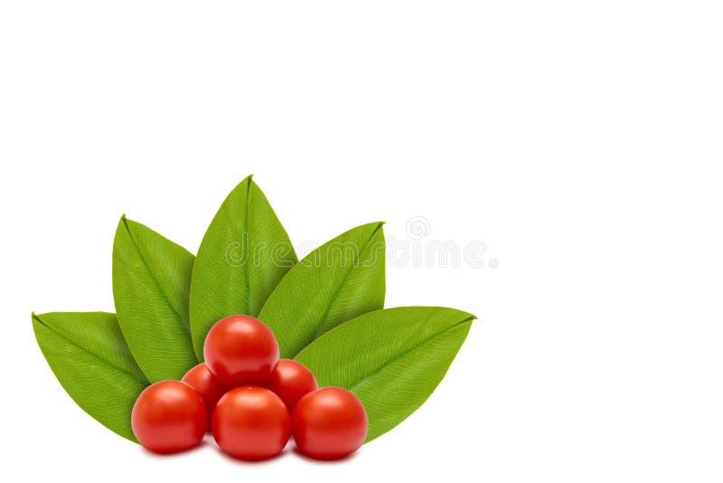 Tomate rojo orgánico fresco en el fondo de hojas verdes Aislado en blanco noción del origen natural foto de archivo libre de regalías