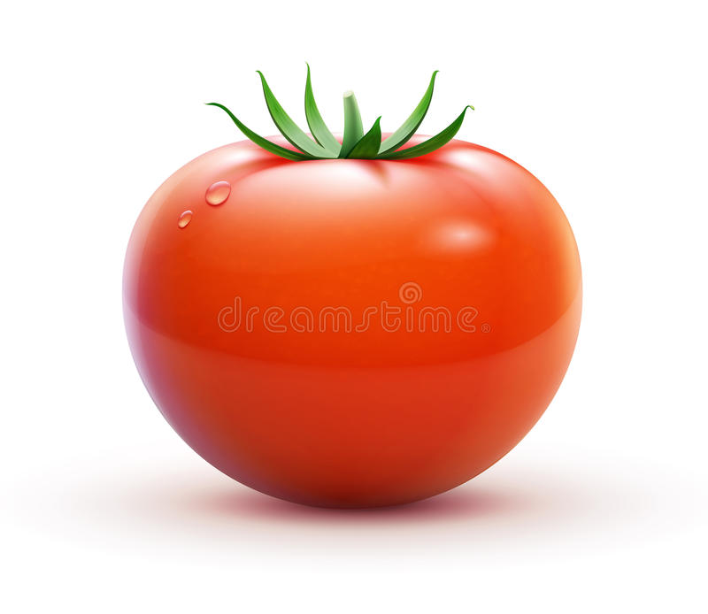 Tomate rouge illustration libre de droits